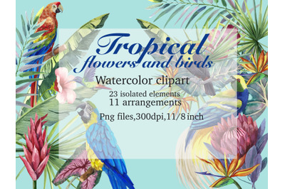 Tropical birds and tropical plants
