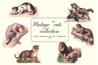 Vintage antique cats clip art graphics