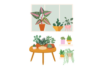 Plants at home. Garden flower pots, greens stand on table, window and