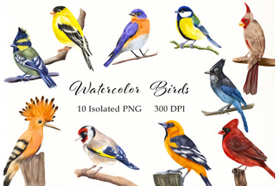 Watercolor Birds Clipart. Hand Painted Small Birds PNG