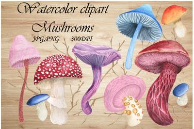 Watercolor Clipart Exotic Mushrooms,rainforest PNG,JPG