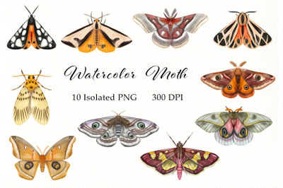 Watercolor Moth Clipart, Butterflies, Insects, Butterfly Catching, Ent
