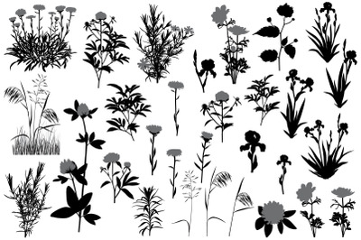 Flowers and plants silhouette