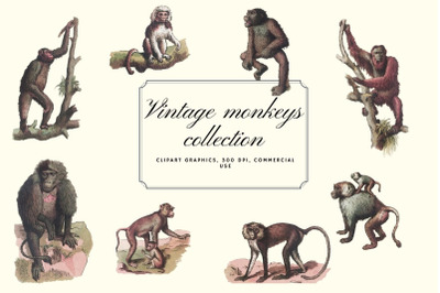Vintage monkeys clip art graphics, Monkey graphics