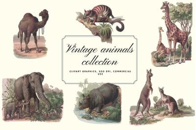Antique Animal Clipart Set, Vintage Elephant Clipart Graphics