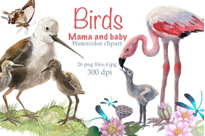 Birds mom and baby ,watercolor Clipart