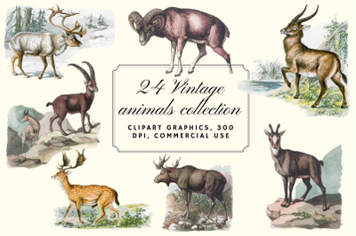 Antique Animal Clipart Set, Vintage Deer Clipart Graphics,