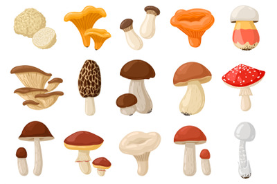 Cartoon mushrooms. Poisonous and edible mushroom, chanterelle, cep, am