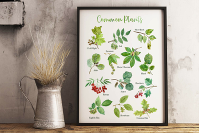 Common Plants Clip Arts and Poster