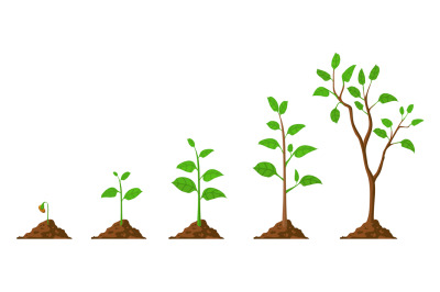 Tree grow. Plant growth from seed to sapling with green leaf. Stages o