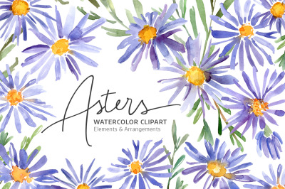 Watercolor Violet Asters Flowers