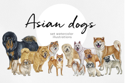 Watercolor 12 dogs illustrations. Asian dog breeds.