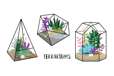 Terrariums with plants