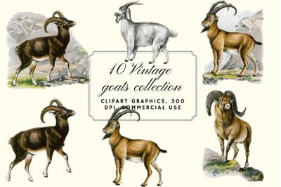 Vintage Goats Illustration, Farmhouse Wall Art