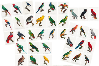 Parrot Journal Tags, 4 Collage Sheets, 36 Tags