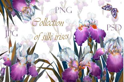 Watercolor clip art, floral pattern of Purple irises
