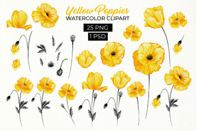 Yellow California Poppies Floral Design Clipart