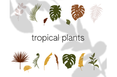 tropical plants, clipart sheets, svg vector, palm leaf, jungle