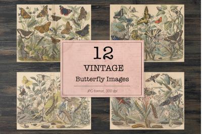 Vintage butterfly, ephemera classics
