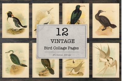 Vintage birds of Australia