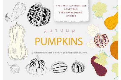 Pumpkins, hand drawn illustrations