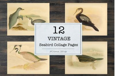 Vintage seabird illustrations