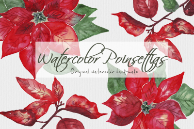 Watercolor Poinsettias Christmas Flowers Leaves