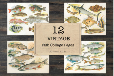 Vintage fish book pages