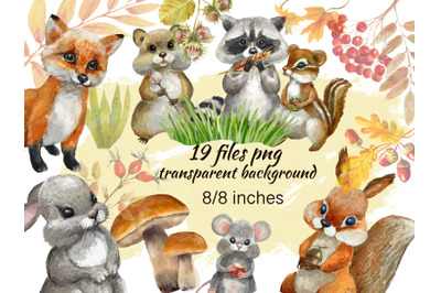 Forest animals watercolor clipart.Woodland animals clipart