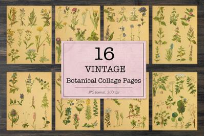 Vintage botanical book pages