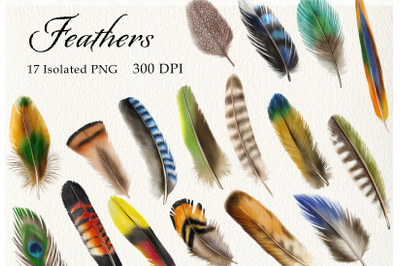 Watercolor Feathers Clipart, Birds Feather, Boho Clip Art PNG