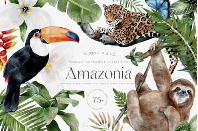 Tropical Rainforest Illustrations Collection and Patterns