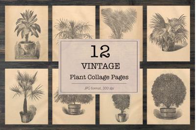 Vintage houseplants illustrations