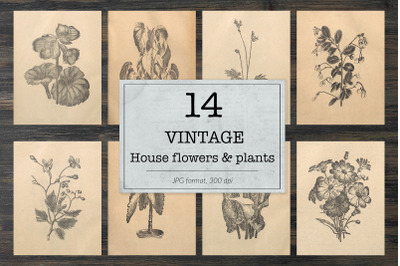 Vintage house flower and plant illustrations