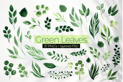 Green Leaves - Watercolor Greenery