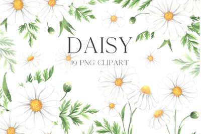 Watercolor Daisy Flower clipart