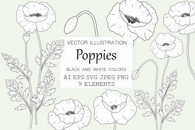 Poppies flowers. Poppies graphics. Poppies coloring SVG