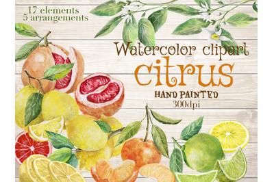 Citrus fruits watercolor clipart.Fruits arrangement. Citrus, flowers '