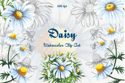 Daisy Watercolor Clipart!
