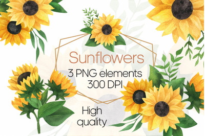 Sunflower bouquet watercolor clipart. Yellow flowers PNG