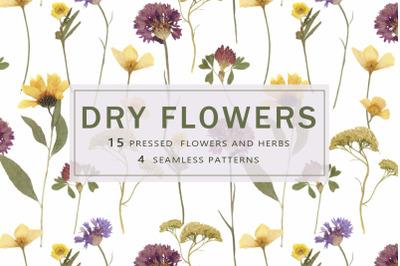 Pressed Dry Flowers & Leaves