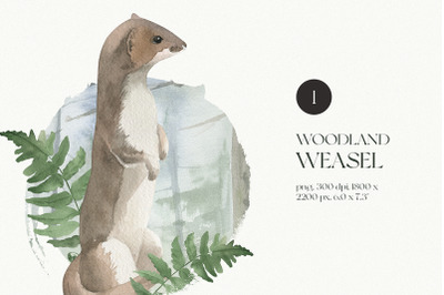 Watercolor Illustration of Weasel