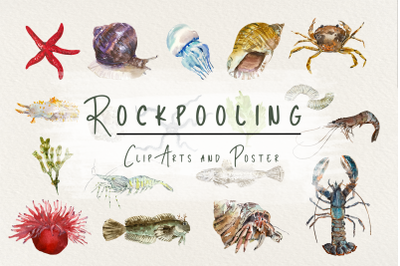 Rockpooling Clip Arts and Poster