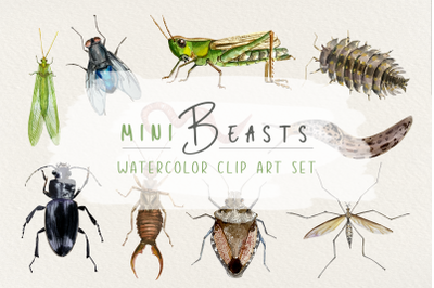 Minibeasts - Watercolor Clip Arts, Stickers and Poster