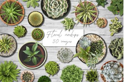 Floral Mockups. Flowers in pots