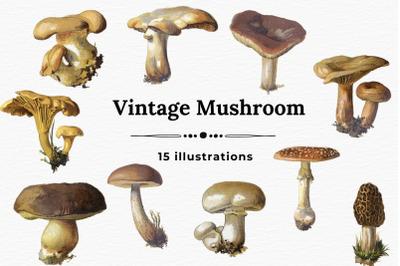 Mushroom Vintage Images, Junk Journal Mushroom Cards