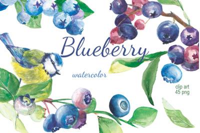 Blueberry watercolor clip art