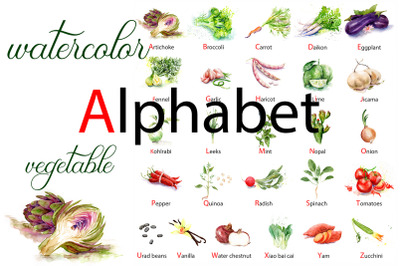English alphabet made from watercolor vegetables.