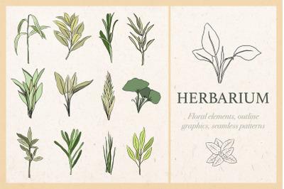 Herbarium - graphic collection