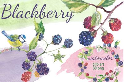 Blackberry watercolor clip art